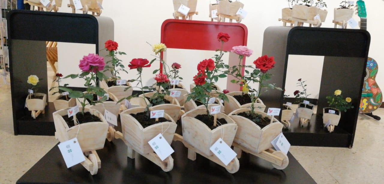 Rosas SSP (4).jpeg